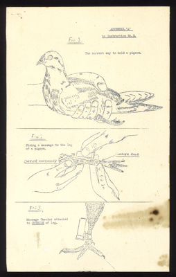 Instruction leaflet - indicating the correct way to hold a Carrier pigeon & attach a container to its leg - plus photocopy; 3809