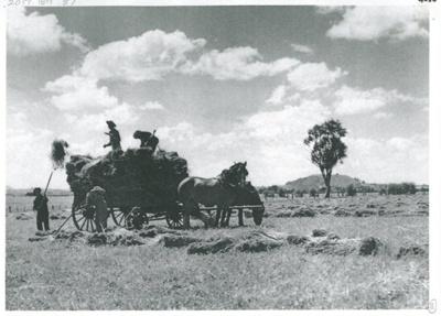 Haymaking on Ferguson's farm, East Tamaki; 1955; 2017.189.87
