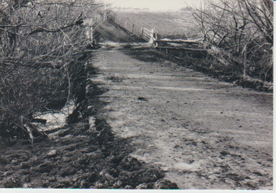 Cattle race over mill pond; La Roche, Alan; 1/07/1991; 2018.177.02