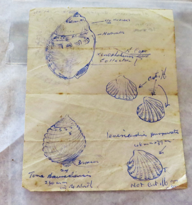 A sheet of sketches was found inside the G E. Phot...