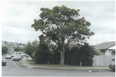 Magnolia Grandiflora, Fortunes Road; La Roche, Alan; 2016.461.57