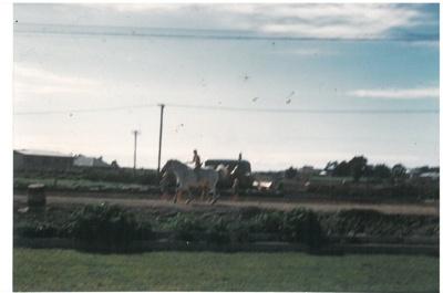 Horse and rider on Pakuranga Road; La Roche, Alan; c1910; 2017.233.54