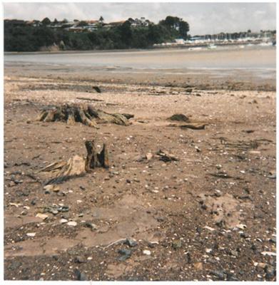 Tree stumps at Little Bucklands Beach; Fairfield, Geoff; 1939; 2017.006.61