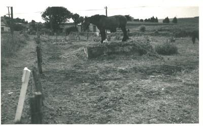 Draught horse, Panmure 1940s; Fairfield, Geoff; c1940; 2017.250.05