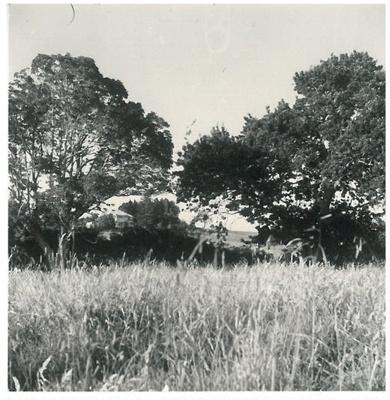 Glenmore Road, Pakuranga; McCaw, John; 1970; 2017.228.02