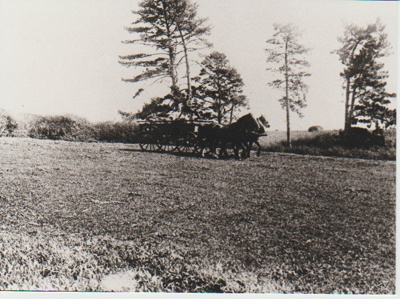Cyril Kelsey's team on Gills Farm; 13.04.1915; 2017.440.24