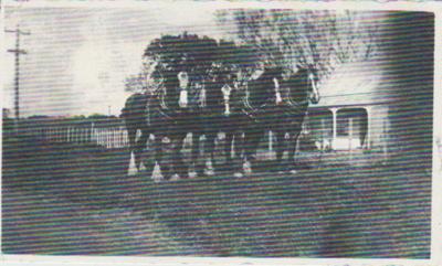 George Sweet's team of Clydesdales; 2017.449.34