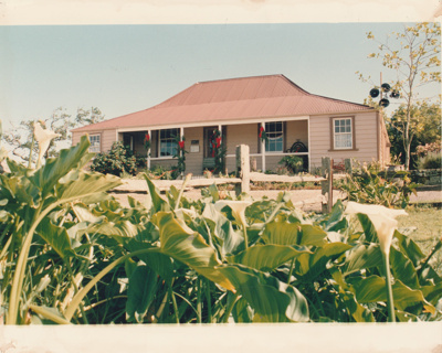 Looking over lilies to Eckford's homestead dressed for Christmas. ; Smith, Christina; December 1987; P2021.07.02