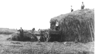 Shaw brothers haymaking at Howick circa 1947