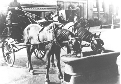 Horse Trough in Pitt Street, Auckland City; C. 1900; 9103