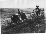 Tractor with steel wheels and plough ploughing at South Auckland; Unknown; 10040