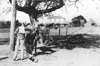 Shoeing Horses - Pakuranga; 1974; 9128