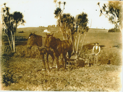 Ploughing on Bell Farm 1910.; Bell, Elsie; 1910; 2018.065.68