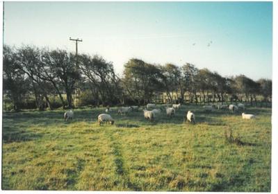 Hawthorndene Farm, 1988; 1988; 2016.279.11