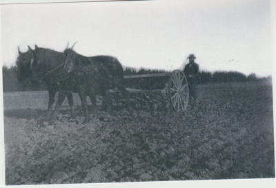 A seed drill pulled by 2 horses at Bell Farm.; c1905; 2017.569.19
