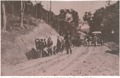 Bullock team on the Whitford-Maretai Road; Macken, Isabella; 1950; 2017.310.65