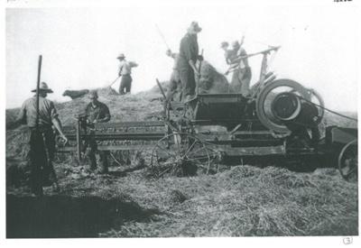 Haymaking on Ferguson's farm, East Tamaki; 1955; 2017.189.84