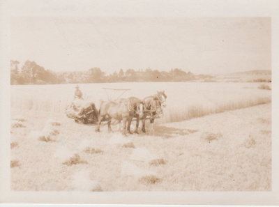 Dufty Bell reaping oats at Kerswill Place, Pakuranga..; Hattaway, Robert; 1950s; 2017.565.06
