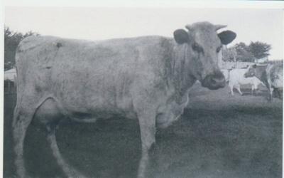 Killing a pig on Bell Farm c1905.; Bell, Elsie; c1905; 2018.065.82