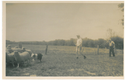 Drafting sheep at Hawthorn Farm; Hattaway, Robert; 1950; 2016.249.28