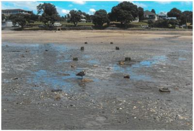 Howick Beach at low tide 2010; La Roche, Alan; 2010; 2016.548.54