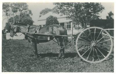 A pony and trap at Hawthorn Farm.; Hattaway, Robert; 2016.276.60