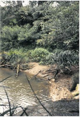 Pakuranga Creek; La Roche, Alan; 1991; 2016.480.81