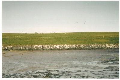 Farm Cove, Pakuranga 1957; Tudehope, T; 1957; 2016.502.01