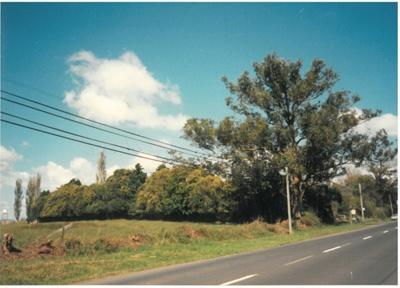 East Tamaki Road near Willowbank Cottage; La Roche, Alan; 1958; 2017.150.29
