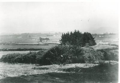 Pakuranga farmland; 1938; 2016.423.20