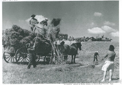 Haymaking on Ferguson's farm, East Tamaki; 1955; 2017.189.86