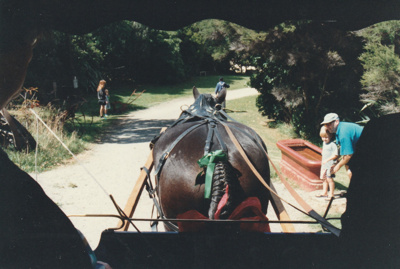 The horse which pulled the trap through the village at the opening of White's Homestead.; La Roche, Alan; 16 March 1997; P2021.74.06