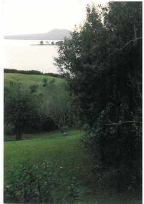 Tainui tree (Pomederris apertula) on Musick Point; La Roche, Alan; c1970; 2016.636.43
