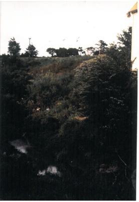 Pakuranga creek behind the Rugby Club; La Roche, Alan; 1988; 2016.489.88