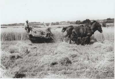 Tommy Mould harvesting wheat.; 1947; 2017.570.19