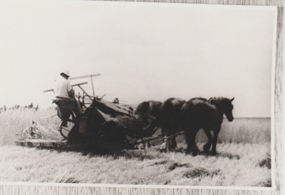 Dufty Bell cutting wheat with his horse-drawn team.; c1916; 2017.580.33