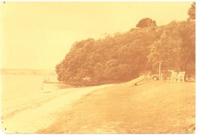 The ancient pohutukawa tree at Cockle Bay.; 1/04/1978; 2017.199.09
