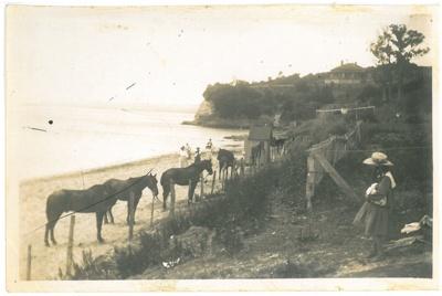 Horses tethered at Howick Beach; 1910; 2016.522.21