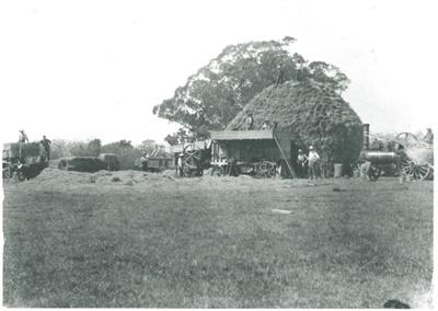 Threshing wheat at Hawthorn Farm; 1908-1911; 2016.272.52