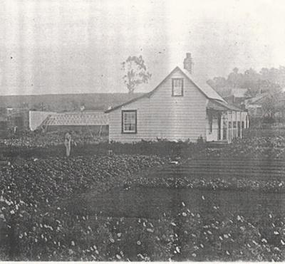 Allen's nursey and cottage in Allenby Road, Panmure c1915; c1915; 2017.261.19