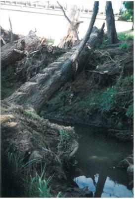 Pakuranga creek with pine bridge; La Roche, Alan; 1977; 2016.487.85