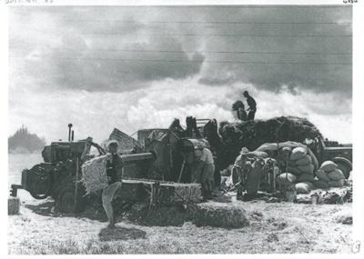 Haymaking on Ferguson's farm, East Tamaki; 1955; 2017.189.85