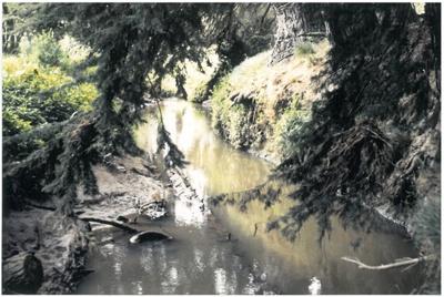 Pakuranga creek with pine bridge; La Roche, Alan; 1991; 2016.489.87