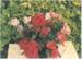Rambler roses at Hawthorndene; Hattaway, Robert; 1982; 2016.281.72