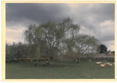 Springtime at Hawthorndene.; Hattaway, Robert; 1982; 2016.266.50