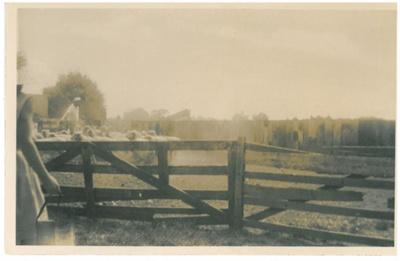 Drafting sheep at Hawthorn Farm; Hattaway, Robert; 1950; 2016.249.27