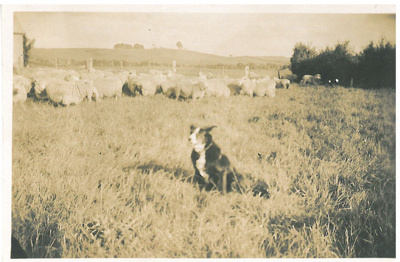 Herding sheep; c1930; 2016.235.05