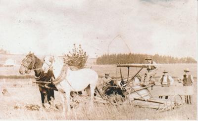 Harvesting oats at Bell Farm.; c1905; 2017.569.12
