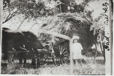 Haymaking at Crawford's Farm, Howick.; c1930; 2017.586.39