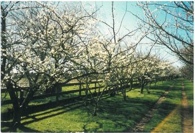 Hawthorndene Driveway; Hattaway, Robert; 1989; 2016.258.42